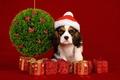 Картинка собака, шарики, Новый Год, праздник, украшения, New Year, Christmas, Рождество
