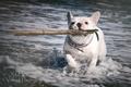 Картинка море, палка, GJ-Vernon, пес