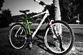 Картинка Велосипед, дерево, черно-белый фон