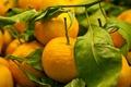 Картинка лакомство, фрукты, мандарины