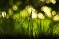 Картинка трава, макро, блики, боке