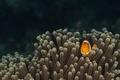 Картинка рыба, морское дно, морская жизнь, глаза, актинии