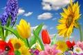 Картинка цветы, flowers, spring, bright, blossom, бабочки, colorful, цветение, весна