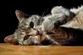 Картинка кошка, кот, серый, лежит, в полоску