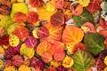 Картинка осень, краски, листва, макро