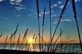 Картинка море, небо, солнце, облака, макро, закат, река, растение