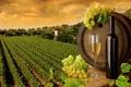 Картинка бутылка, бочка, бокал, вино, листья, белое, виноградники, виноград