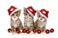 Картинка merry christmas, cat, kitty, eyes, kitten, pretty, magic, adorable, red balls, christmas balls, balls, cat ...