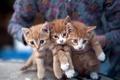 Картинка три, рыжые, котята, трое, кошки