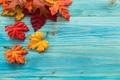 Картинка клен, доски, осень, листья