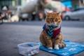 Картинка кошка, взгляд, улица