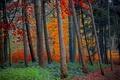 Картинка осень, лес, листья, деревья
