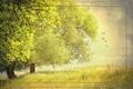 Картинка стиль, лето, деревья, фон, природа