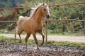 Картинка боке, грязь, лошадь, рыжий