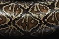 Картинка текстура, змеи, шкура