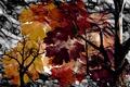Картинка природа, листья, цвет