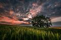 Картинка дерево, пейзаж, природа, небо, трава, облака, закат