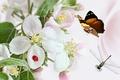 Картинка цветы, стрекоза, божья коровка, коллаж, бабочка