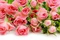 Картинка pink, flowers, roses, розы