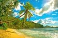 Картинка океан, пальмы, берег, Сейшелы