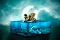 Картинка рыбы, девушка, аквариум