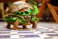 Картинка Черепаха, бутерброд, юмор, животные, овощи
