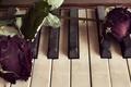 Картинка цветы, розы, пианино