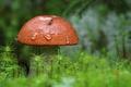 Картинка макро, гриб, природа