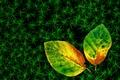 Картинка осенние, трава, два, листья