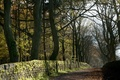 Картинка дорога, деревья, осень, пейзаж