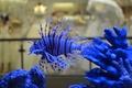 Картинка синяя, аквариум, рыбка