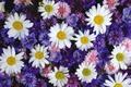 Картинка ромашки, цветочная поляна, васильки, колокольчики