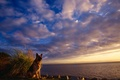 Картинка Овчарка, облака, небо, море