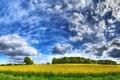 Картинка Небо, поле, облака, желтый