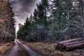 Картинка бревна, природа, дорога, деревья, колея, Лес, HDR, осень