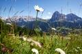 Картинка цветы, горы, лес, природа