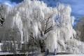 Картинка зима, снег, деревья, речка, мостик