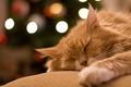 Картинка лежит, домашнее животное, отдых, спит, рыжий, сон, кот